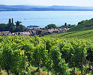 Mount Vully - Home of good food and wine